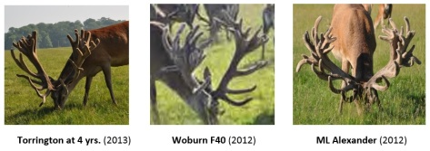 New Sires Woburn2
